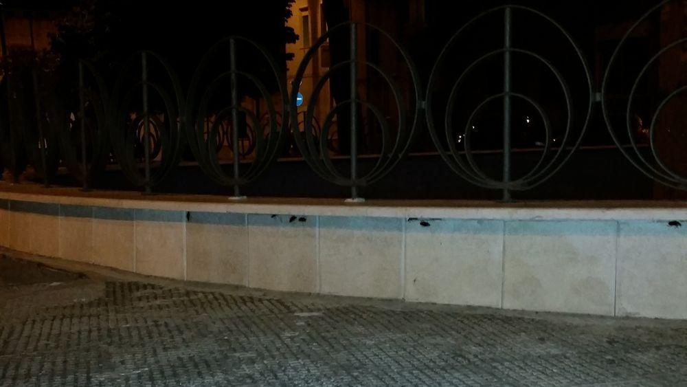 Invasione di blatte rosse in citt anche negli for Piani di palazzi contemporanei